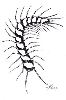 centipede monster ink